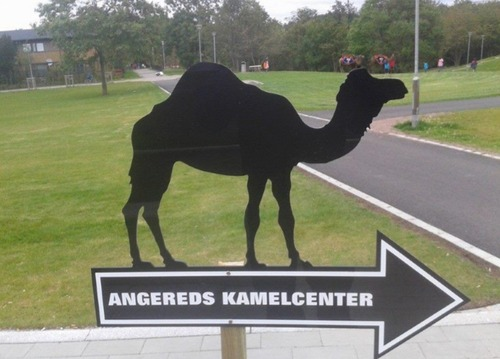 Image result for Kamelcentret i Angered